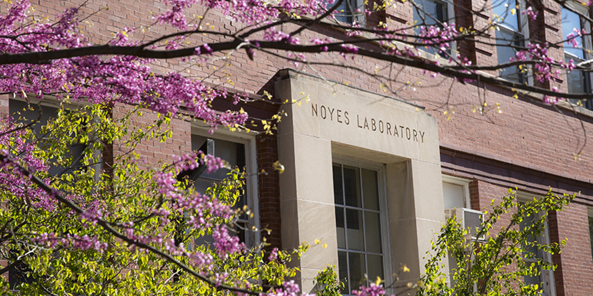 Spring photo of the Southwest entrance to Noyes Laboratory with a tree, full of blooms, in the foreground.