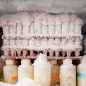 Photo of lab items frosted over in a freezer