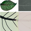 Three images of leaves, showing vascular networks, illustrating the synchronized manufacturing of a bioinspired structure with a hierarchical vascular network.